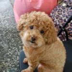 台湾鉄道一人旅 番外編 台湾の犬アルバム。