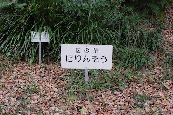 itabashi19