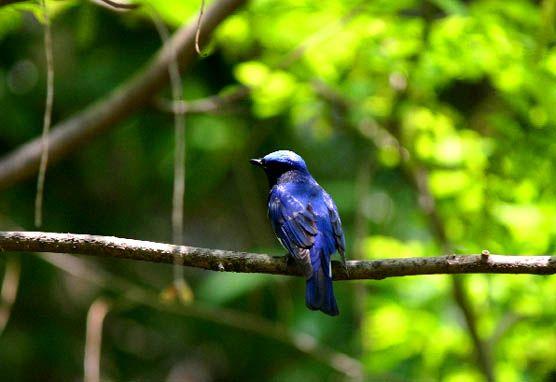 bluebird.min