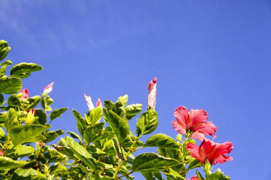 skyandflower