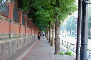 東大銀杏並木