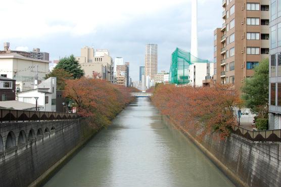 秋の目黒川