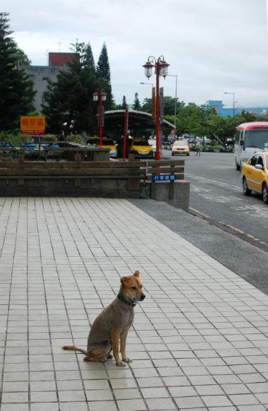 taitungdog_1