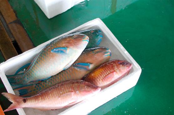 taiwan-foods57