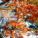 大田黒公園で少し遅めの紅葉狩り。東京散歩・杉並区