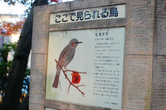 suginami_48