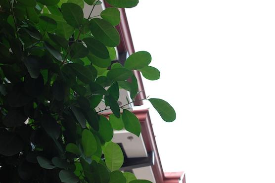 cebu-diary-01-1
