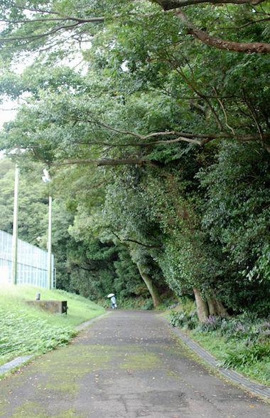 tokushima_park3